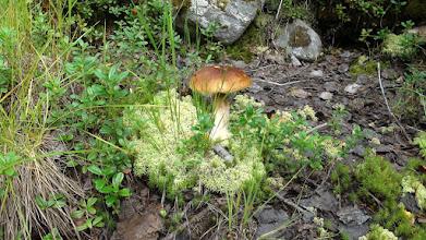 Photo: Белый гриб