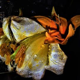 by Snezana Zivkovic - Abstract Water Drops & Splashes