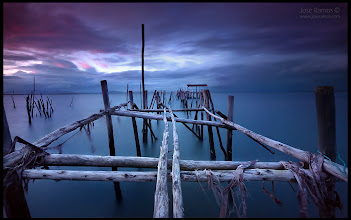 """Photo: """"The Last Survivor"""" 
