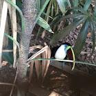 Red-billed Toucan, Burung Toucan Paruh Merah