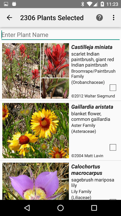 BC Wildflowers- screenshot