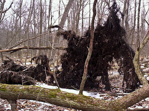 Photo: Swamp and fallen trees along the Spring Pond Trail.
