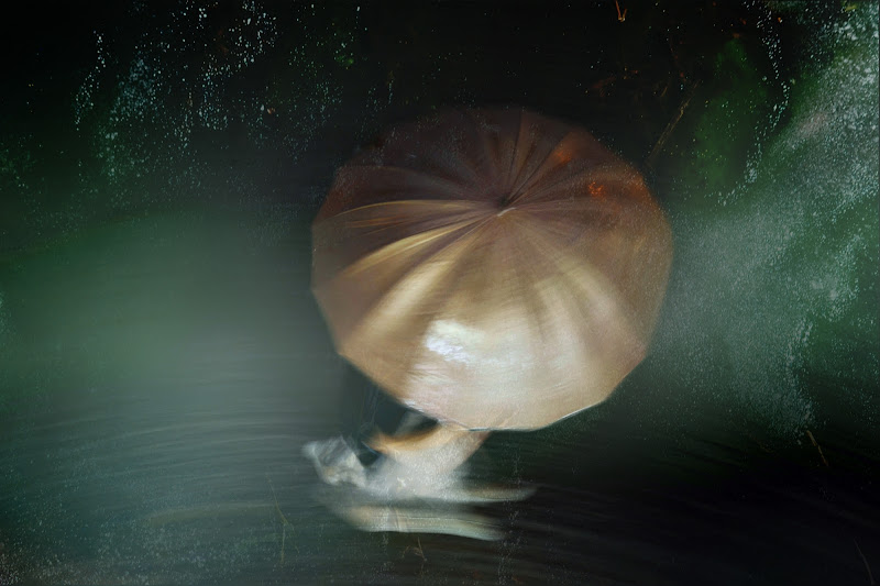 Velvet Rain di Angel Abbott