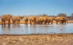 familie olifant drinkt in een poel
