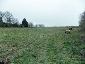 terrain à Massignac (16)