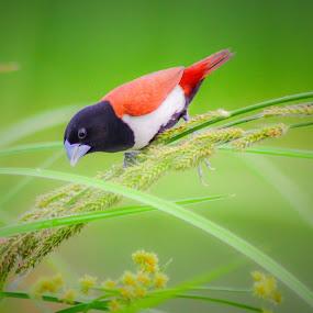 by Suman Basak - Animals Birds ( bird, foodie, monsoon )