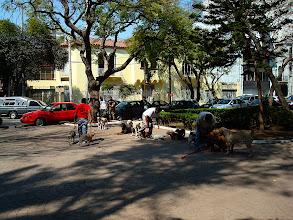 Photo: doggie school at the Parque Mexico