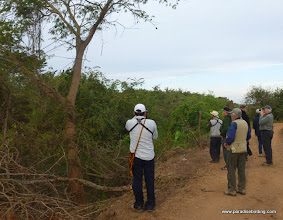 Photo: DAY 4: Birding with local guides Francisco and Jonathan among the thickets at Chacalilla, north of San Blas