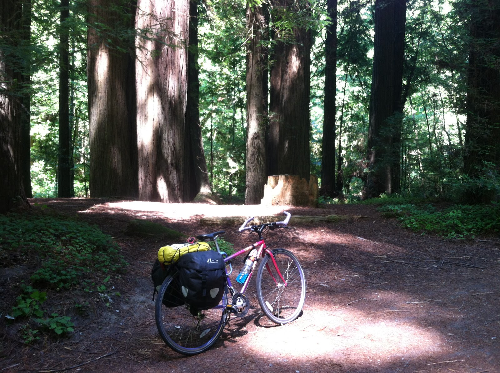 redwoods bike trip