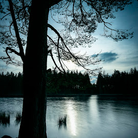 Plantain Loch by James Johnstone - Landscapes Waterscapes ( plantain, waterscape, tree, loch, dalbeattie, water, landscape,  )