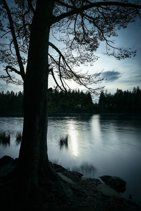 Plantain Loch by James Johnstone - Landscapes Waterscapes ( plantain, waterscape, tree, loch, dalbeattie, water, landscape,  )