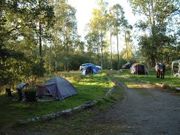 Image result for camping in the woods