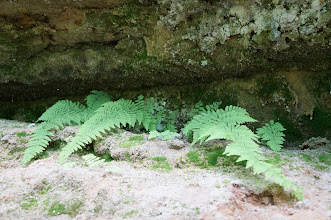 Photo: A few ferns make their homes in the rock joint.
