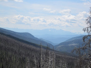 Photo: View from the road to Long Swamp. Unfortunately, we saw a lot of dead  trees from bug infestation followed by fire.