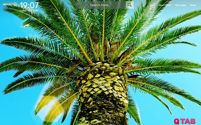 Palm Tree Wallpapers New Tab