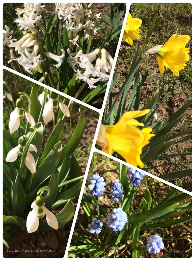 Spring flowers in bloom, Piestany, Slovakia