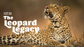 The Leopard Legacy thumbnail