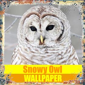 Снежные обои совы птиц