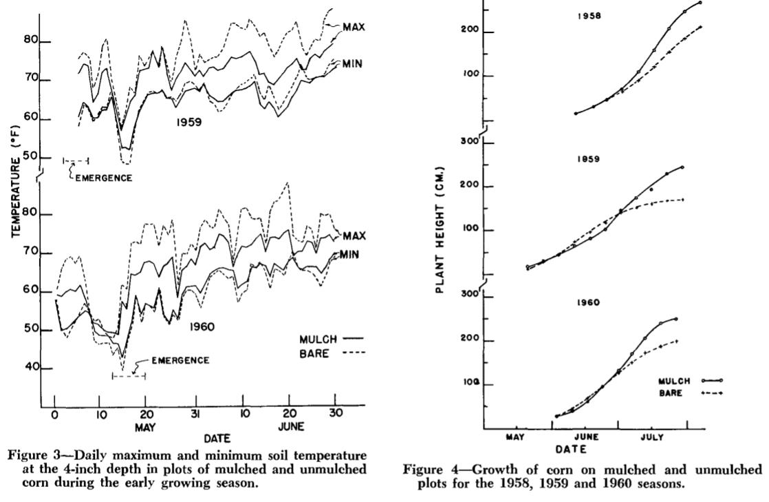 Temperatura  gleby (z lewej) oraz wysokość kukurydzy (z prawej) w funkcji czasu w zależności od obecności lub braku ściółkowania sianem