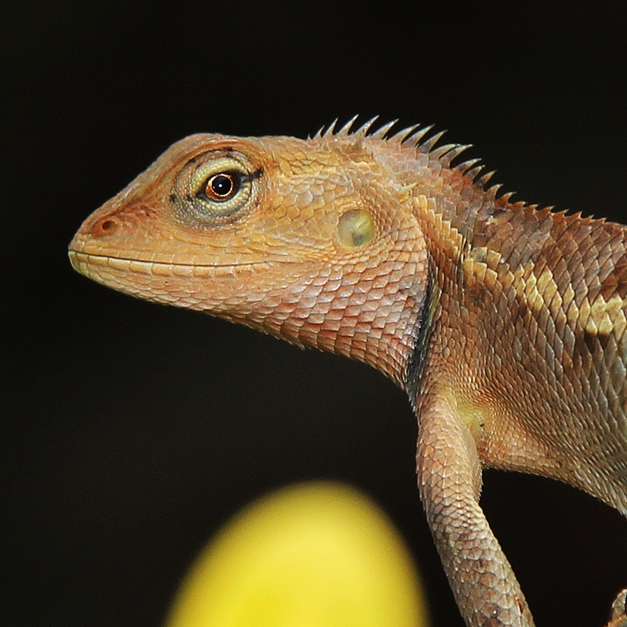 by Megarianti Megarianti - Animals Reptiles