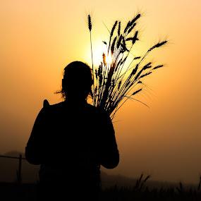 Sunset paddy field by Bishal Ranamagar - Landscapes Sunsets & Sunrises ( paddy field, sunset, suekhet valley, rice planting, valley )