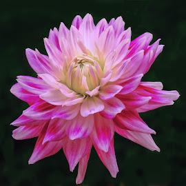 Yellow & purple flower by Jim Downey - Flowers Single Flower