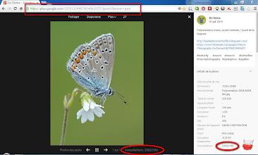 Photo: G+ 23,000,000 views ! :) http://lepidoptera-butterflies.blogspot.com/