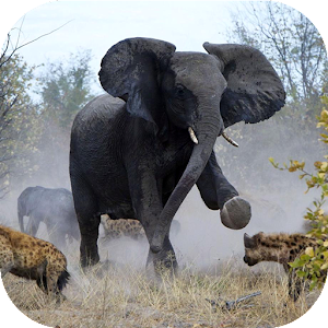 Angry Elephant Jungle Rampage for PC and MAC
