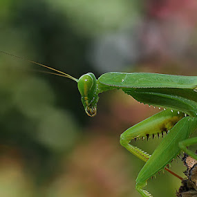 thinking by Angga Putra - Animals Insects & Spiders