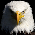 free live eagle wallpapers icon