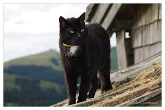 Photo: Schwarze Katze an ihre Lieblingsplatz