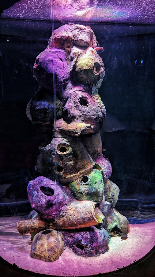 Vibrant by Shamsad Mhd - Abstract Patterns ( fishtank, vibrant, patterns, abstract, colors,  )