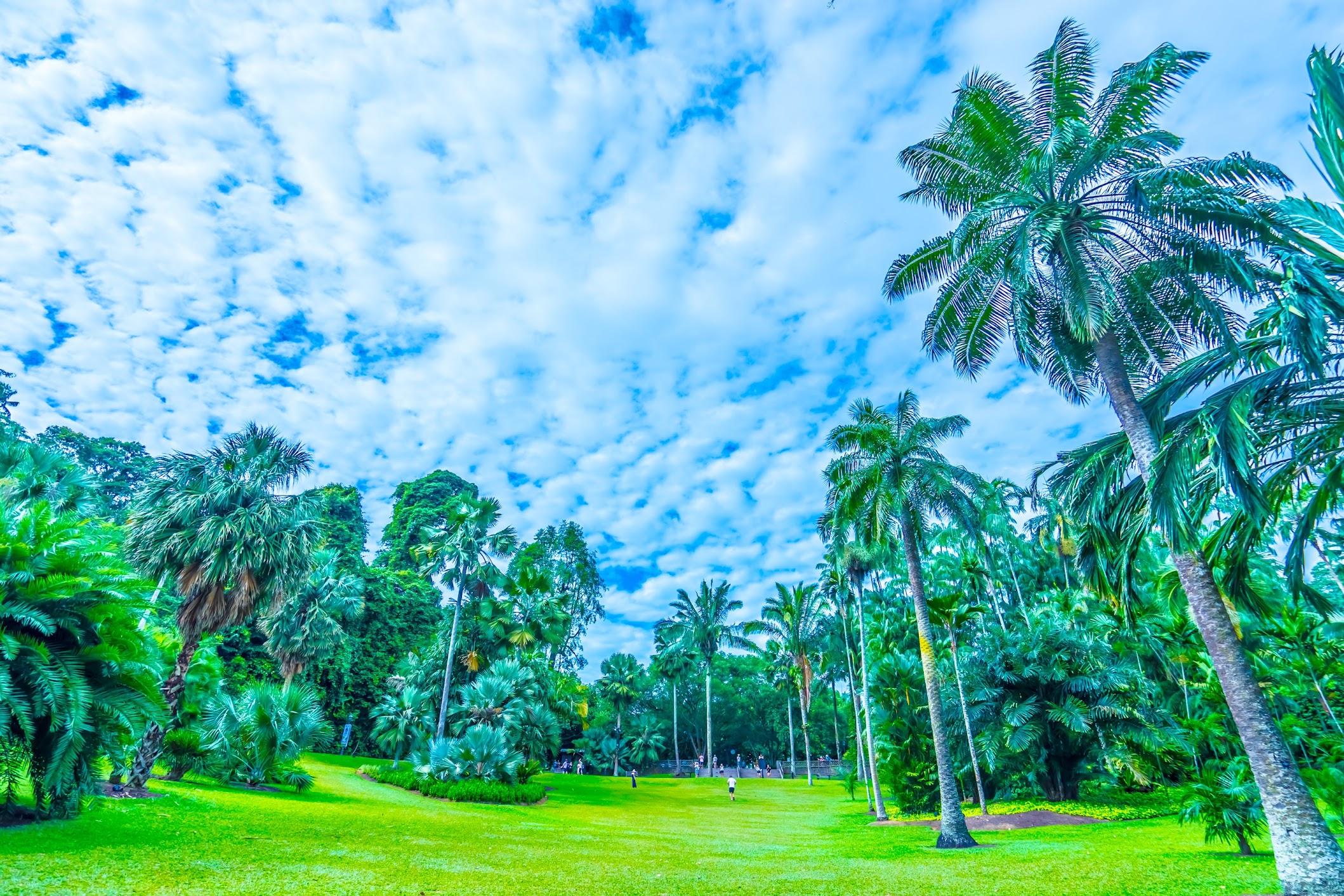シンガポール植物園(ボタニック・ガーデン) パーム・バレー2