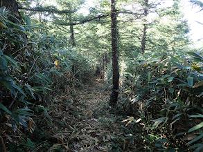 樹林帯へ入り涼しく