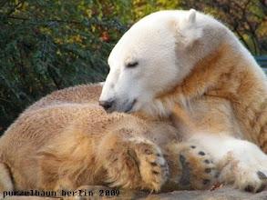 Photo: Egal, Fellpflege ist wichtiger ;-)