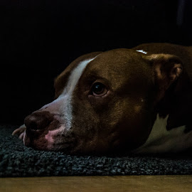 Missing by Iva Marinić - Animals - Dogs Portraits ( love, calm, looking, portrait, dog, eyes, look, photography )