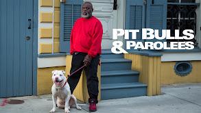 Pit Bulls and Parolees thumbnail