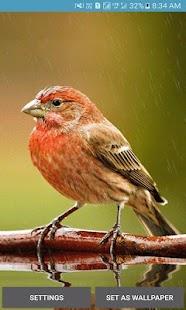 Lovely bird Live Wallpaper - náhled