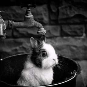 Film noir by Ani Desu - Animals Other