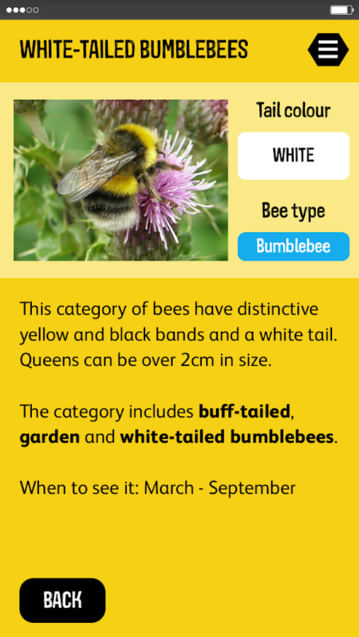 The Great British Bee Count- screenshot