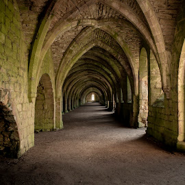 Vaulted by Darrell Evans - Buildings & Architecture Other Interior ( stonework, historic, columns, old, cistercian, cellarium, medieval, historical, tourism, history, building, stone, abbey, monastery, fountains abbey, vaulted, lay brothers, arch, no people, ruin, architecture )