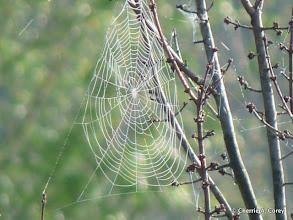Photo: Webs
