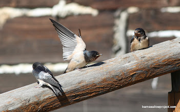 Photo: Stretching those new wings
