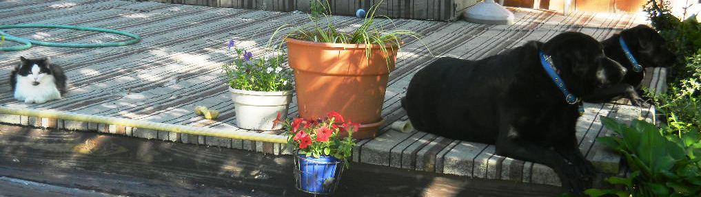 My three dogs 2014 helping me water my plants.jpg