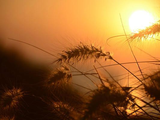 oro tramonto sul mare di fefe