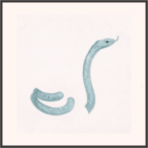 霊蛇ポニ-幻