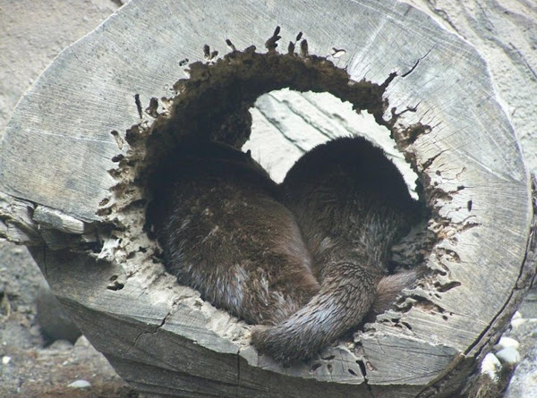 Otters At Rest Recipe