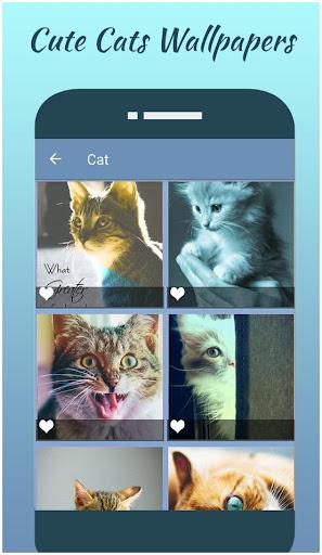 Download Cute Dog Wallpaper Cute Cat Wallpaper Free For Android Cute Dog Wallpaper Cute Cat Wallpaper Apk Download Steprimo Com
