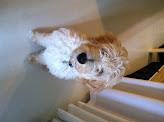 Photo: Woof! my dog.