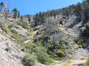 Photo: View east into the headwaters of Soldier Creek